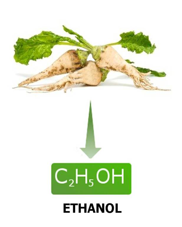 sugar beet converted to bio-ethanol